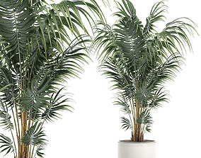 3D model Decorative palm in a white flowerpot 518