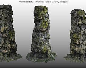 Oak tree base - scan based 3D model realtime