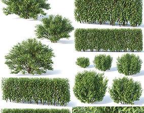 3D Forsythia 8 bushes Plus 2 hedges collection flora