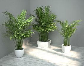 landscaping 3D Palm set