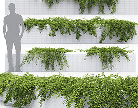Cotoneaster Dammeri flora 3D