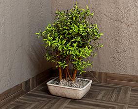 3D House plant 001