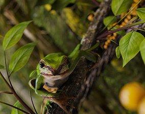 Green Frog rain 3D model