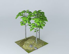 european Breech Fagus sylvatica 3D