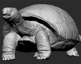 Galapagos Tortoise Sculpt 3D model