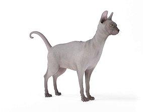 Hairless Sphinx Cat 3D