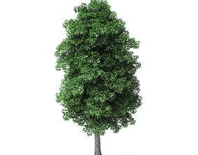 White Ash Tree 3D Model 8m