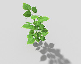 3D asset realtime Plant