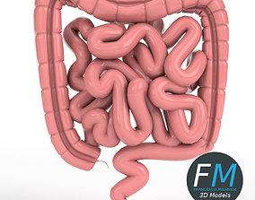 3D Anatomy - Human Intestine
