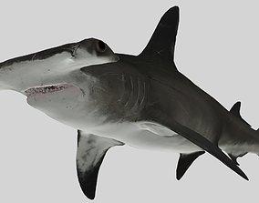 3D SHARK 02