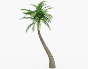 3D model PBR Palm Tree
