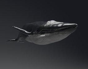 3D whale Blue Whale