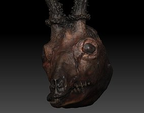Skinned Deers Head High Detail Scan With Texture 3D model