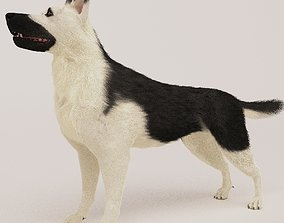 3D East European Shepherd Dog