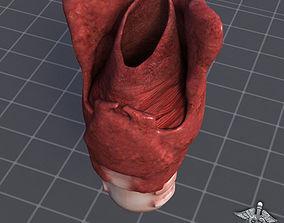 Throat Larynx 3D