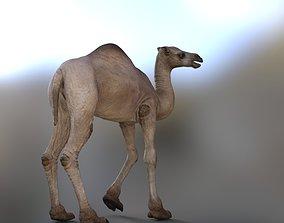 3D asset Camel accessories