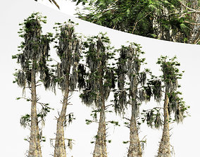 3D Bald Cypress tree collection