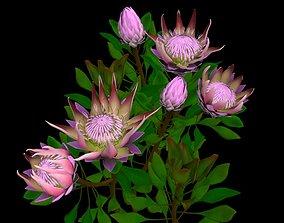 3D asset Flower Protea King