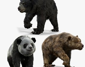 animals Bear Collection 3D model