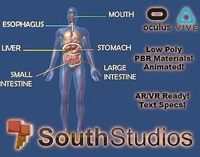 animated Animated Human Body Digestive System AR VR Unity