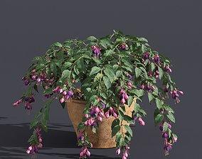 Fuchsia 3D