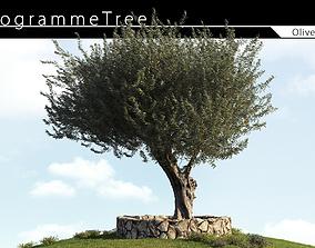 3D Olive Tree 03