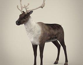 Realistic Reindeer 3D asset