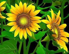 Flower Helianthus Annuus 3D model