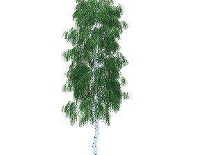 Birch height 20 metre middle quality 3D