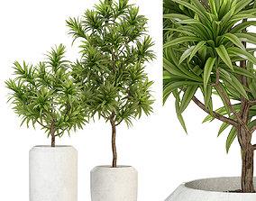 Plants collection 304 3D