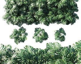 Vertical garden Monstera deliciosa 3D