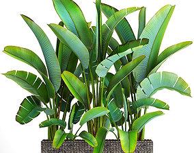 3D model Ravenala palm 5