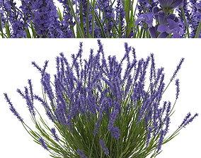 3D PBR Lavender bush