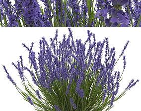3D Lavender bush