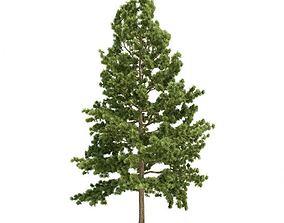 3D Tree Eastern White Pine