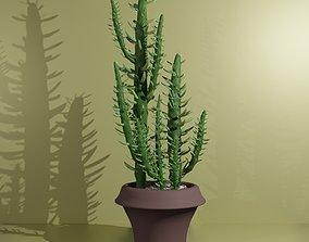 3D asset Indoor plant Cactus