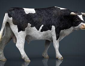 Holstein Bull 3D asset