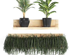 Collection of Exotic Plants 406 3D model