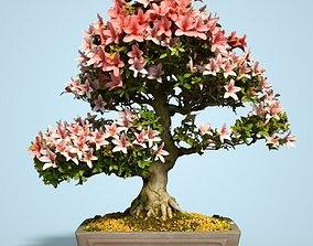 Satsuki Bonsai Tree Blossom 10 3D asset