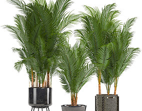 3D Collection of decorative palms