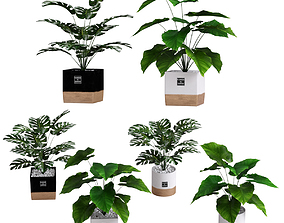 Collection of plants 1 3D
