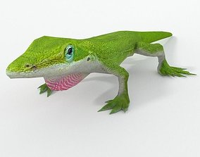 3D asset Anole Lizard - Carolina anole