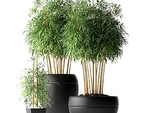 Bamboo plant 3D