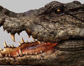 Crocodile 3d model animal