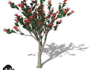 3D model XfrogPlants Ohia Lehua