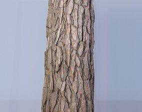 3D Scan - Tree log 04