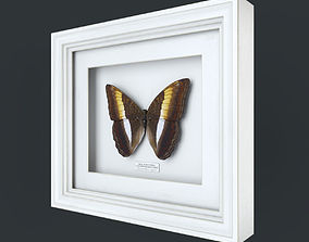 decor Butterfly Bicolour Commodore 3d model