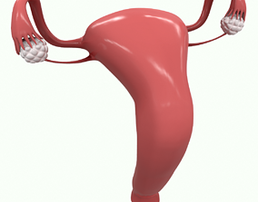 Female Reproductive System Section 3D