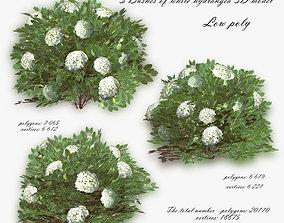 Bush Hydrangea White low poly 3D model realtime