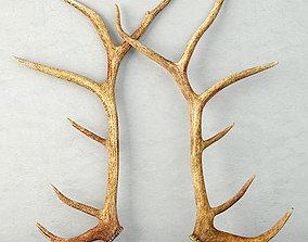 Monumental Unmounted Elk Antlers 3D